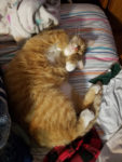 Boomstick Sleeping